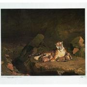 Trousse 4, Une faune à apprivoiser 4